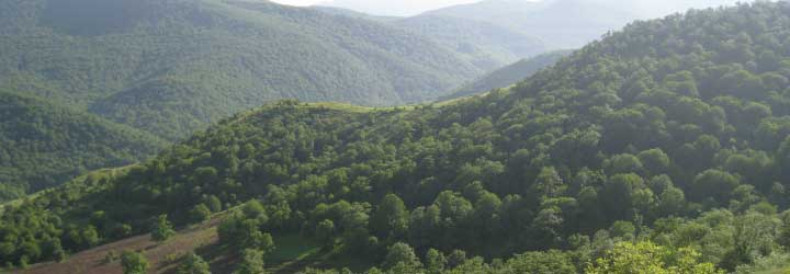 Forests of Armenia